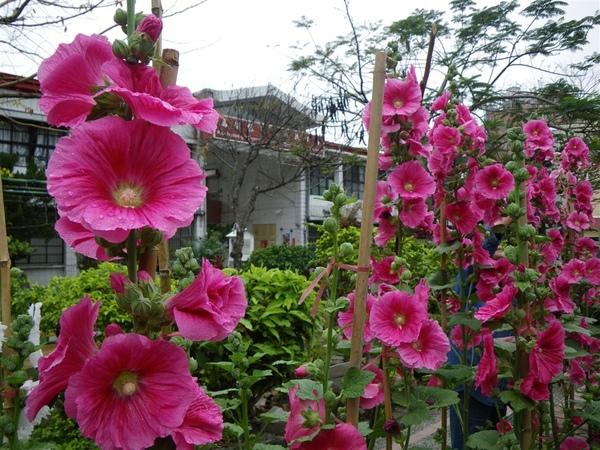 寶來溪溯登小關山2009-03-14 08-33-05_0001.JPG