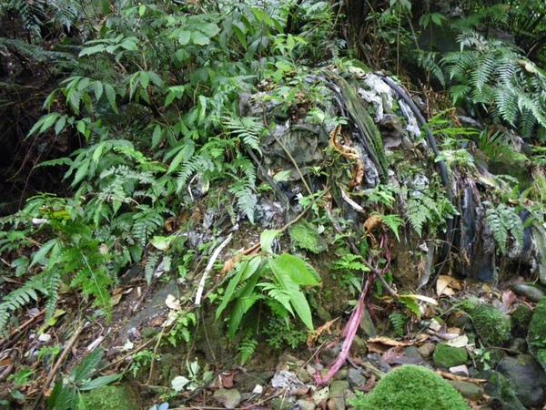 上磺溪淨溪(3)_2009-04-11 13-30-56_0099.JPG