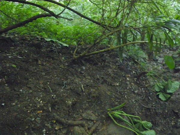 上磺溪淨溪(3)_2009-04-11 16-34-01_0161.jpg