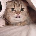 小小貓天地