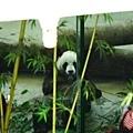 努力吃的熊貓