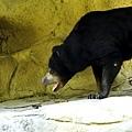 肥滋滋的黑熊