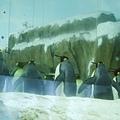 愛照鏡子的企鵝