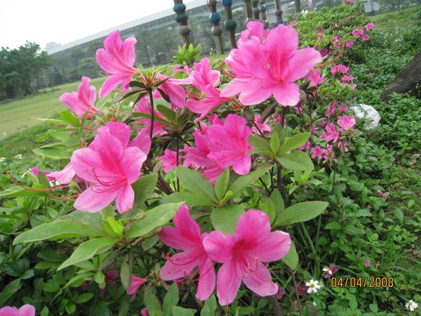 公園內的花-1