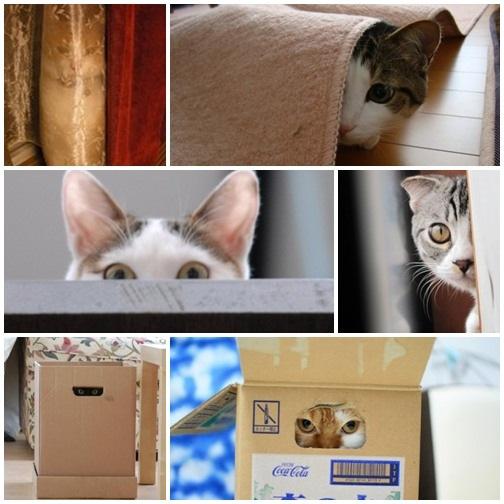 貓咪偷窺大集合006