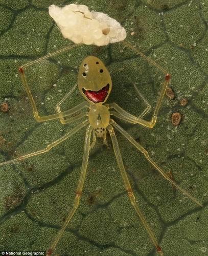 笑臉蜘蛛001.jpg