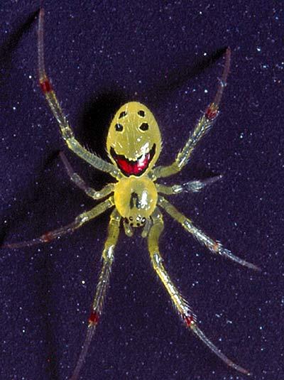笑臉蜘蛛003.jpg