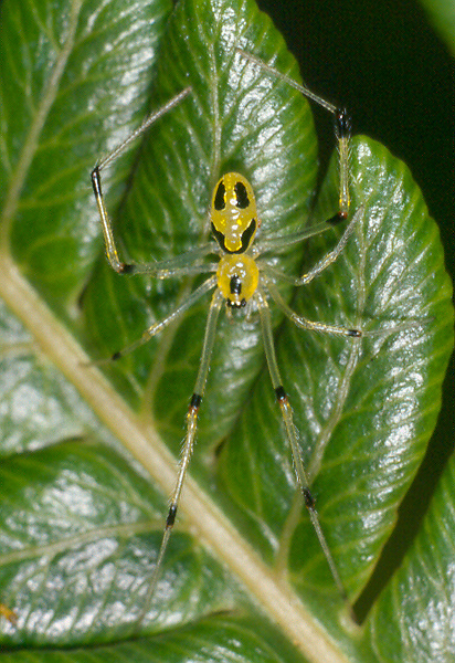 笑臉蜘蛛004.jpg
