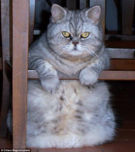 真版加菲貓Guily003.jpg