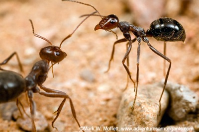 螞蟻百萬戰爭