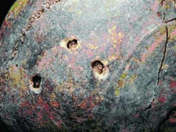史前小巨人有3個鑽孔