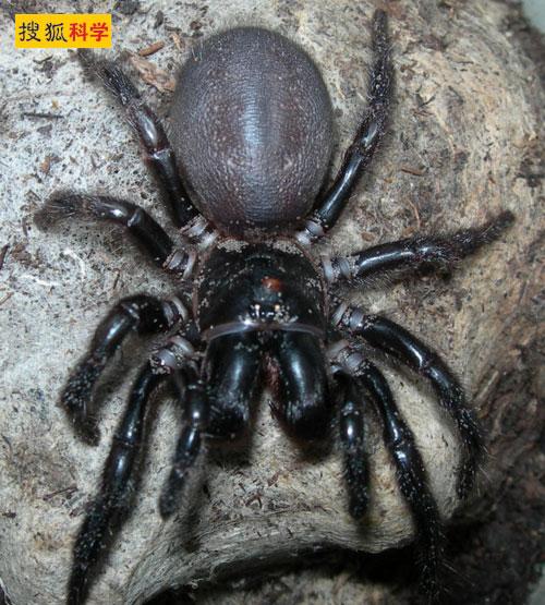 漏斗形蜘蛛.jpg