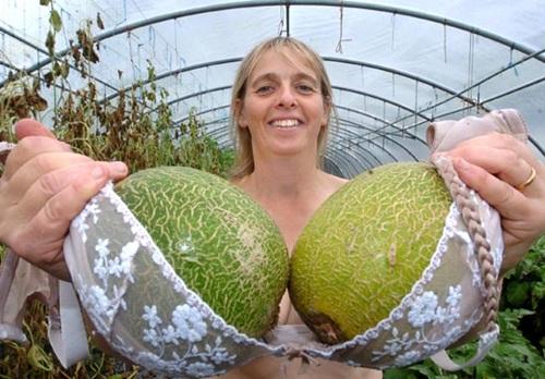 英農婦奶罩種香瓜001.jpg