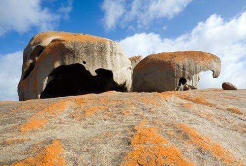 全球最美海濱島嶼  5.澳大利亞袋鼠島.jpg