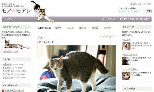 123木頭貓莫爾