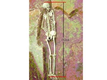 陜西發現史前小巨人