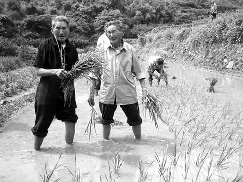 中國雙胞胎村-鶴山村017.jpg