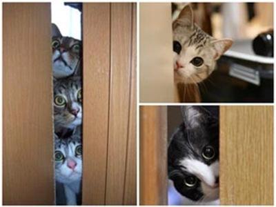 貓咪偷窺大集合001