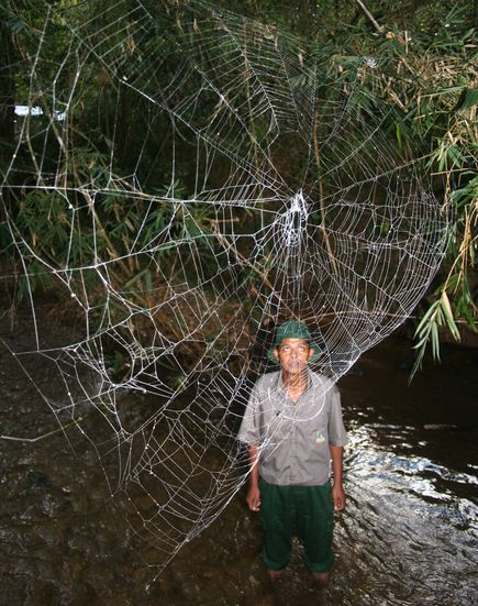 世界最大蜘蛛網001.jpg
