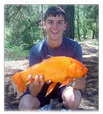 2公斤大金魚003