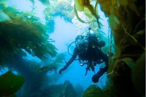 全球最美海濱島嶼  9.加利福尼亞卡塔琳娜島.jpg