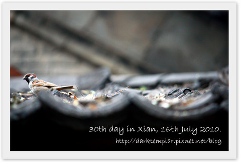 1007 30th day in Xian.jpg