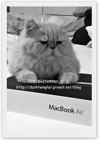 Yoda with Macbook.jpg