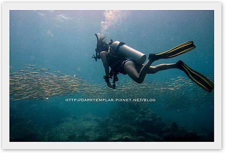2015 Phi Phi Diving 01