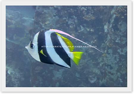 2015 Seychelles 05