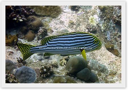 2015 Seychelles 09