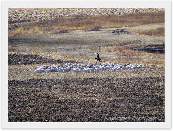 Inner Mongolia (17).jpg