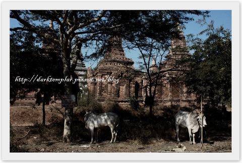 Bagan (8).jpg