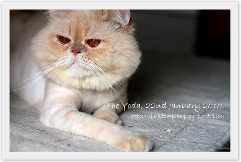 100122 The Yoda.jpg
