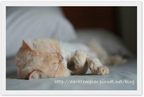 Yoda Sleeping.jpg