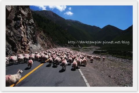1007 Qinghai Lake (4).jpg