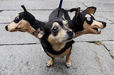 三頭犬.jpg
