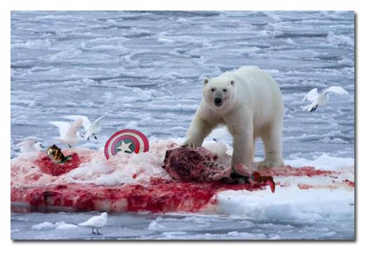 美國隊長被熊吃