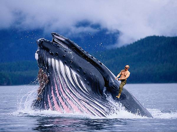 普亭騎鯨魚.jpg