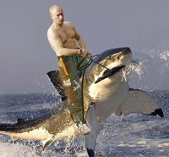 普亭騎鯊魚.jpg