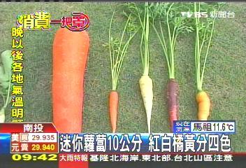 迷你蘿蔔.JPG