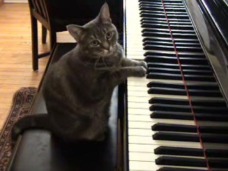 貓彈鋼琴.jpg