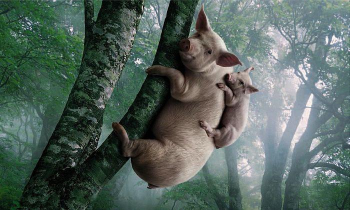 母豬會上樹.jpg