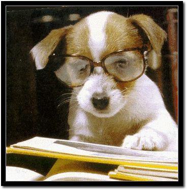 專家只不過是訓練有素的狗.jpg