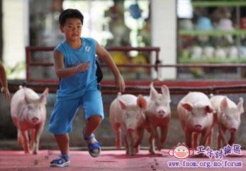 人豬賽跑.jpg