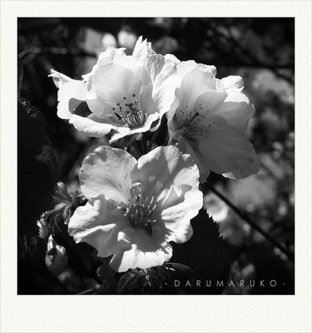 Darumaruko_photo_shop_11033_06.jpg