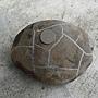 荖濃溪龜甲石