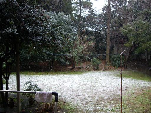 後院積雪囉