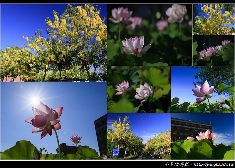 Pictures_zps1a9af277.jpg