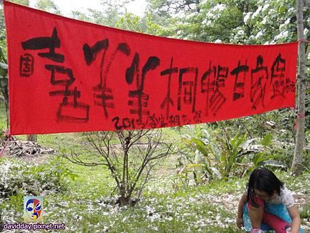 2015.5.1.甘家堡桐花DSC03747.JPG
