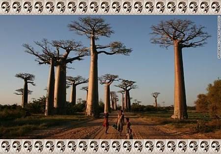 1+6、馬達加斯加:猴麵包樹大道.jpg-2